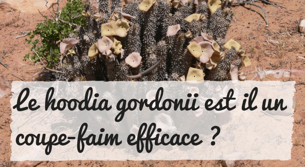 Le hoodia gordonii est il un coupe-faim naturel et puissant