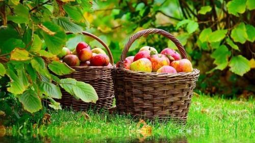 cure detox monodiete pommes